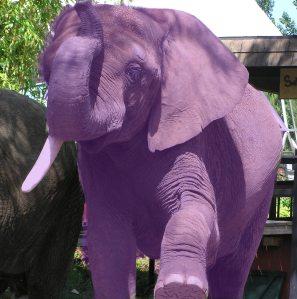 eleph-crop-purple