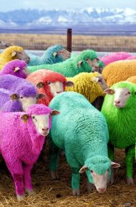 dyed sheep 2